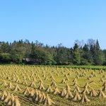 バーリーマックスの効果とは? ~スーパー大麦グラノーラの食物繊維がスゴイ!~