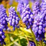 注目のスーパーフード『ビーポーレン(Bee Pollen)』ってなに?栄養価と効果効能