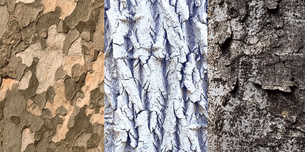 公園で撮影した木の幹